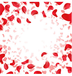 Red rose falling scattered petals wedding vector