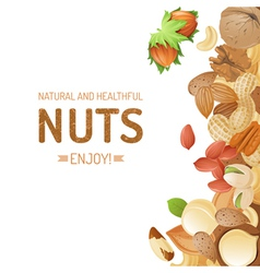 Bright background with different nuts vector image