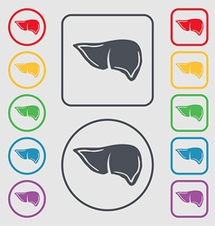 Liver icon sign symbol on the Round and square vector image