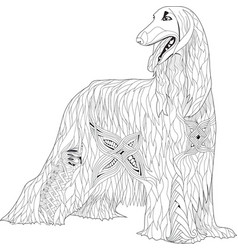 Zentangle stylized afghan hound hand drawn lace vector