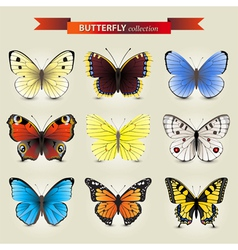 Butterfly new vector