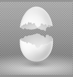 opened white egg with broken shell isolated vector image