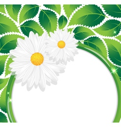 Chamomiles and leaves vector image