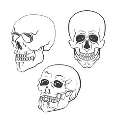 set of skulls on white background vector image