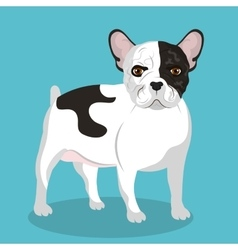Bulldog breed design vector