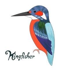 Bird kingfisher vector