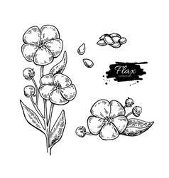 Flax flower and seed superfood drawing set vector