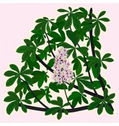 horsechestnut blossoms vector image