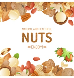Bright background with different nuts vector
