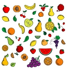 Ripe fresh fruits and berries icons vector image vector image