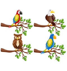 different kinds of birds on the branch vector image