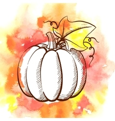 Hand drawn watercolor pumpkin vector