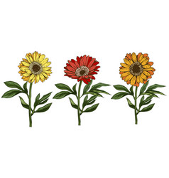 Three hand drawn yellow and red daisy flowers vector