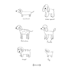 Cute cartoon dogs of various breeds vector