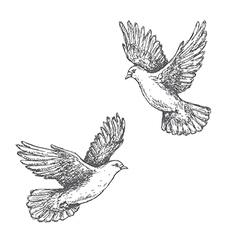 doves sketch vector image
