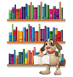 A dog holding a book in front of the bookshelves vector image