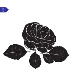 Flower and leaves of roses in black and white vector image