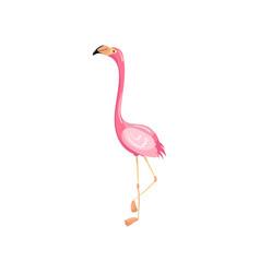 Pink flamingo exotic tropical bird vector