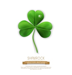Green shamrock on a white background vector
