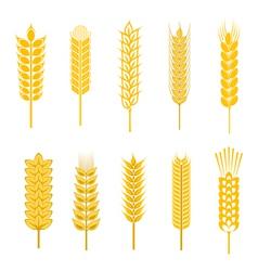 cereal symbols vector image vector image