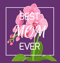 Mothers day pink orchid frame violet background vector