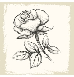 Rose Flower in Vintage Style vector image
