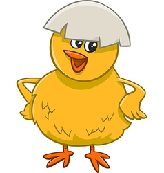 Little chick cartoon character vector