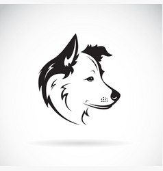 border collie dog on white background pet vector image