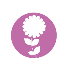 Camomile flower natural icon vector
