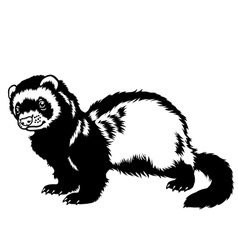 Ferret black white vector