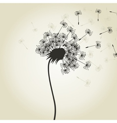 Flower a dandelion2 vector