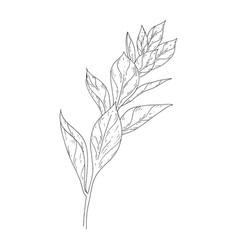 Leaves ink sketch on white background vector