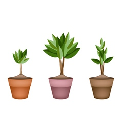 Evergreen trees and plants in ceramic flower pots vector