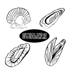 The sketch set seafood oysters and scallops vector