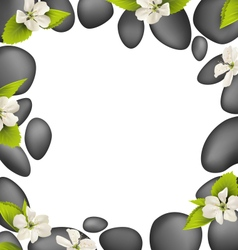 Spa stones with cherry white flowers like frame vector
