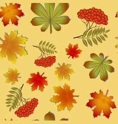 autumn pattern with maple leaves and rowan vector image