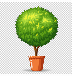 bonsai in clay pot vector image vector image