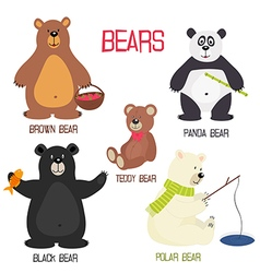 Set of isolated different bears vector