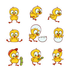 Set of cute new-born baby chicken characters vector