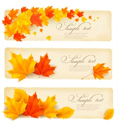 Three autumn banners with colorful leaves vector image vector image