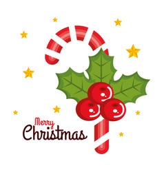 merry christmas candy cane sweet holly berry star vector image