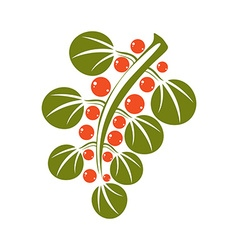Single simple green leaf with orange seeds vector