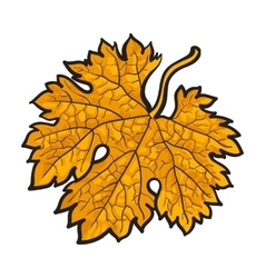 Beautiful yellow colored autumn maple leave vector image