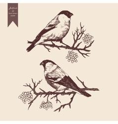 Bullfinch set Hand drawn vector image vector image