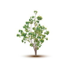 Trees isolated vector