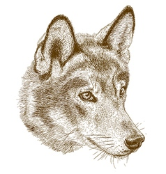 Engraving wolf head vector