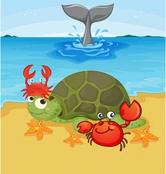 Sea animals on the beach vector image
