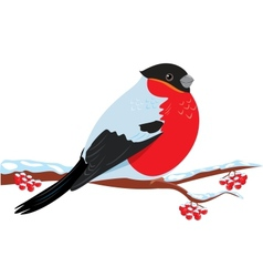 Bullfinch vector