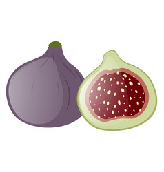 fresh fig whole and half vector image