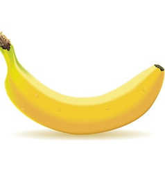One banana isolated on white vector